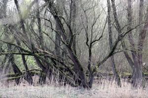 Bomen in de Biesbosch