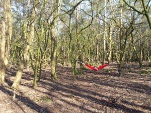 Hangmat in het bos