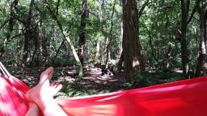 Hard werken in het bos